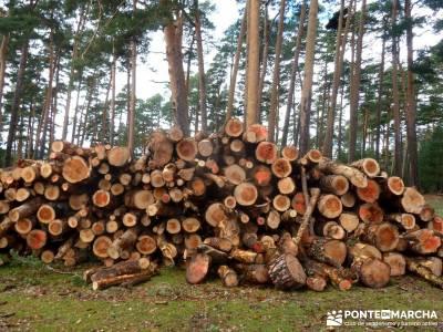 Chorranca, Moño Tía Andréa; alemania la selva negra rutas madeira estacion pinilla cuenca del man